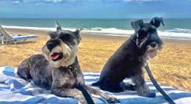 st augustine beach dogs